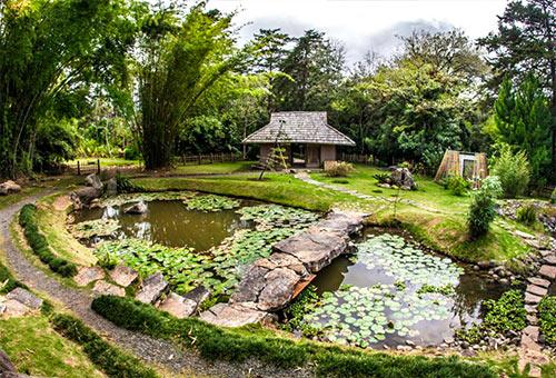costa-rica-voyages-jardin-botanic-lankester