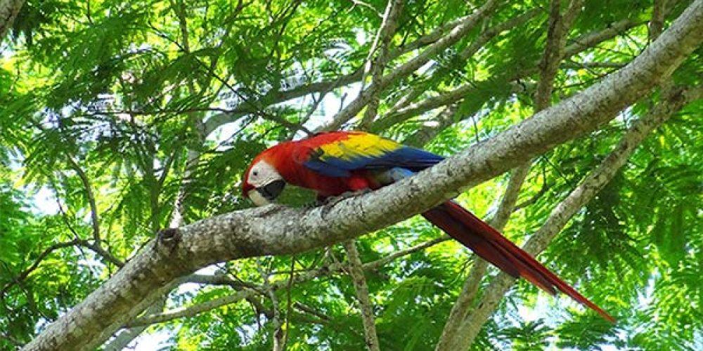Voyages Costa Rica a la carte2