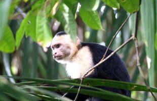 Voyages Costa Rica a la carte7